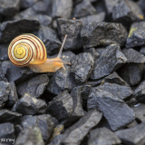 Snail Photo