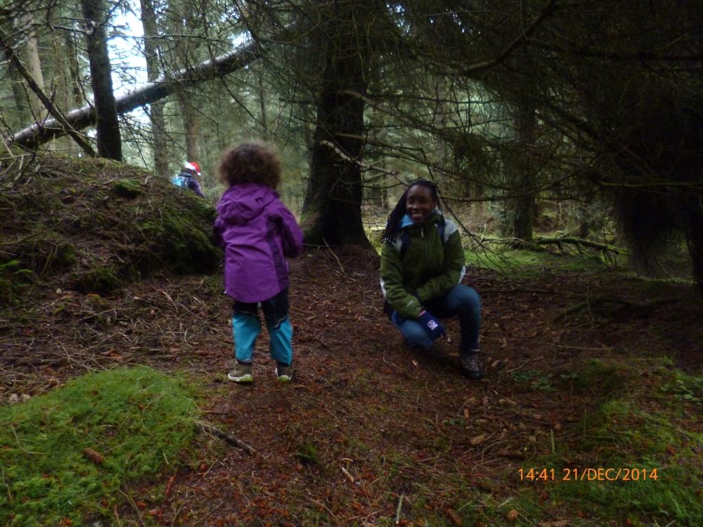 cruagh woods 1