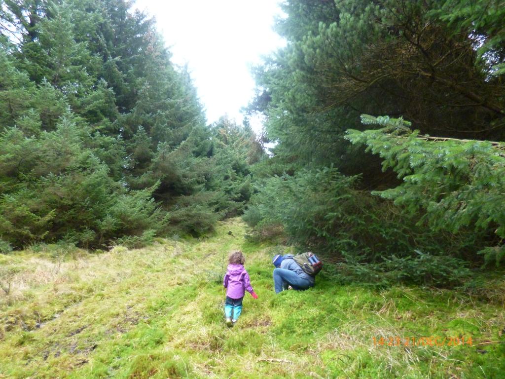 cruagh woods 2